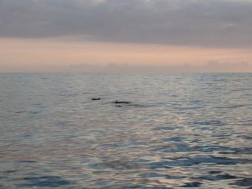 Humpback Whales!!